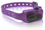 Dogtra iQ-No-Bark-Collar-Purple iQ No Bark Collar Black
